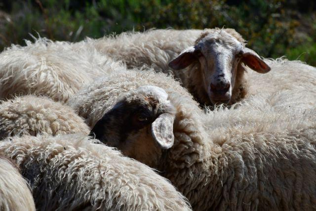 Καταρροϊκός πυρετός: Αυξάνονται τα κρούσματα στην Κεντρική Μακεδονία | tanea.gr