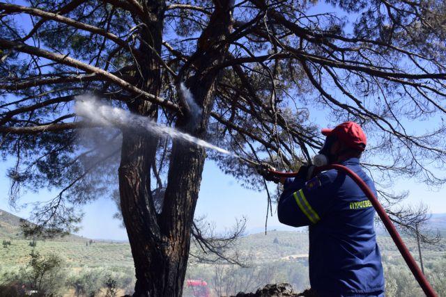 Φωτιά καίει δασική έκταση στο Δερμάτι Καρπενησίου | tanea.gr