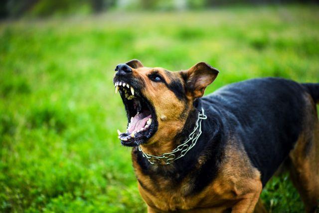 Επίθεση από αγέλη σκύλων σε 17χρονη – Τη δάγκωσαν 58 φορές | tanea.gr