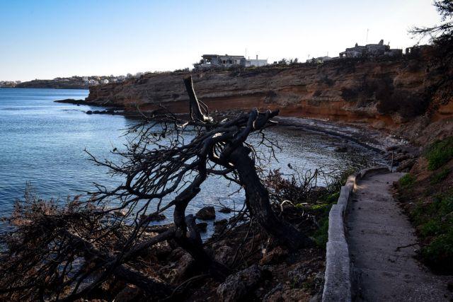 «Καμπανάκι» Χαρδαλιά για πυρκαγιές: Η Παρασκευή η πιο επικίνδυνη ημέρα του καλοκαιριού | tanea.gr