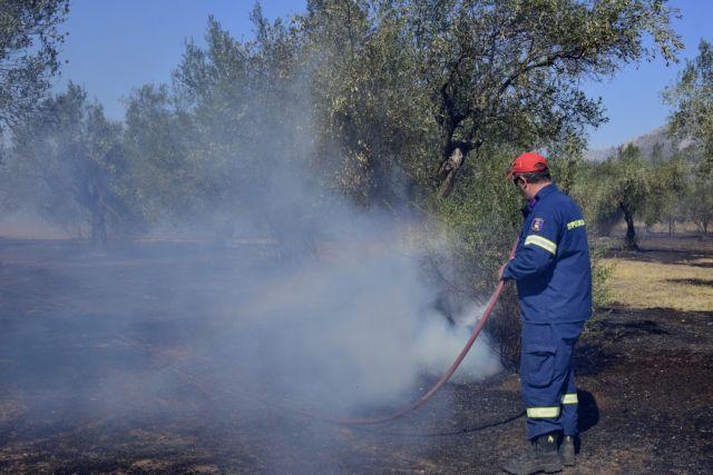 Συναγερμός στην Πυροσβεστική: Πυρκαγιές σε Φθιώτιδα και Ηλεία   tanea.gr