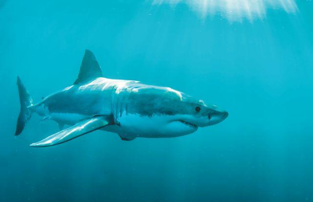 Με θάνατο κινδυνεύουν 500 χιλιάδες καρχαρίες λόγω κοροναϊού | tanea.gr