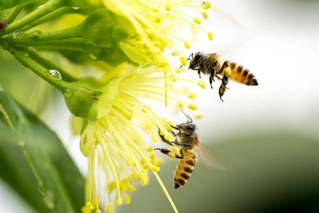 Πώς το δηλητήριο της μέλισσας σκοτώνει καρκινικά κύτταρα σε 60 λεπτά | tanea.gr