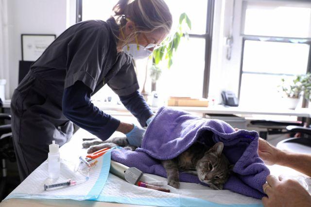 Οι άνθρωποι μεταδίδουν τον κοροναϊό στις γάτες και στους σκύλους | tanea.gr