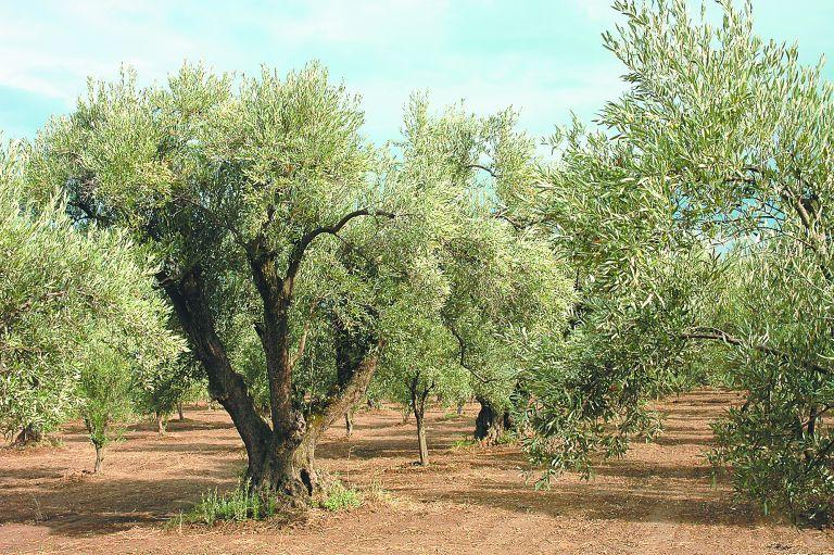 Φρένο στην κλιματική αλλαγή βάζουν τα καρποφόρα δένδρα | tanea.gr