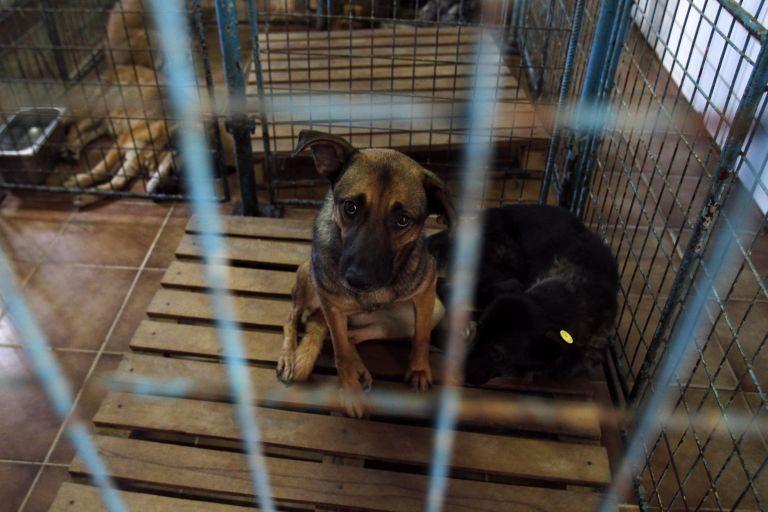 Συλλήψεις και αυτόφωρο για την κακοποίηση ζώων- Τι αναφέρει εγκύκλιος του Αρείου Πάγου | tanea.gr