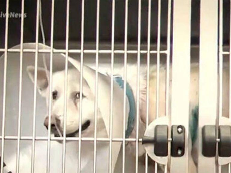 Χαμός έξω από τα δικαστήρια Πειραιά: Λίντσαραν τους κατηγορούμενους για την επίθεση σε σκύλο | tanea.gr