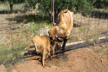 Σε διαθεσιμότητα ο υπάλληλος της ΔΕΗ που βασάνισε τον σκύλο στην Κρήτη   tanea.gr