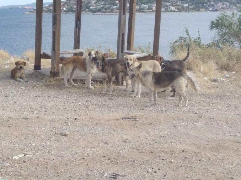 Τουρίστες παράτησαν στη Σαλαμίνα 4.000 σκυλιά που τους ήταν βάρος!   tanea.gr