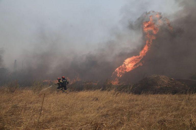 Φωτιά στην Ηλεία – Ισχυρές δυνάμεις της πυροσβεστικής | tanea.gr
