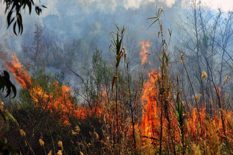 Πυρκαγιά σε δασική περιοχή στη Σιθωνία | tanea.gr
