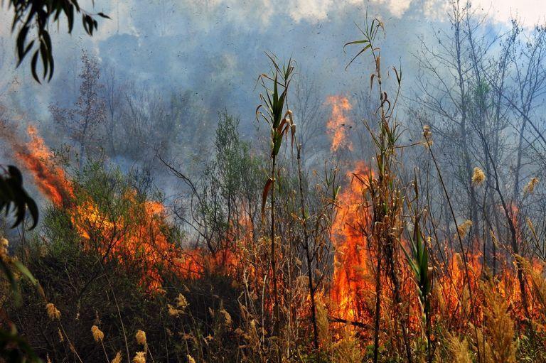 Θεσσαλονίκη: Φωτιά σε δασική έκταση στην Μικροκώμη | tanea.gr