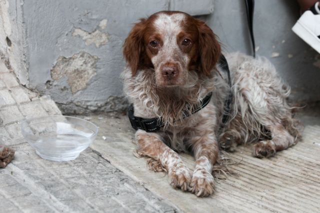 Βορίδης: Εισηγούμαι να γίνει κακούργημα ο βασανισμός ζώου | tanea.gr