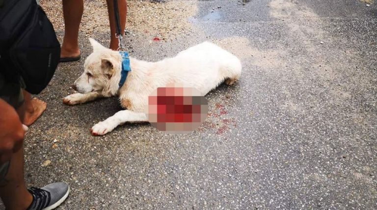 Επίθεση σε σκύλο στη Νίκαια: Ύβρεις κατά του καθηγητή που μαχαίρωσε το ζώο   tanea.gr