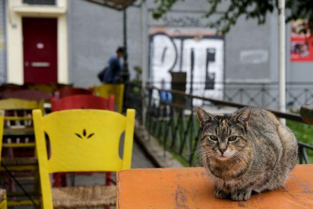 Τα μέτρα του lockdown θα εξειδικεύσει ο Νίκος Χαρδαλιάς | tanea.gr
