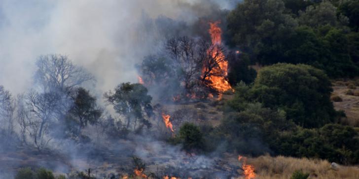 Φωτιά καίει δασική έκταση στα Μέγαρα | tanea.gr