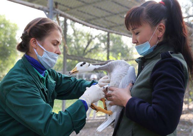Βρετανία : Γρίπη των πτηνών εντοπίστηκε σε φάρμα στη νότια Αγγλία | tanea.gr