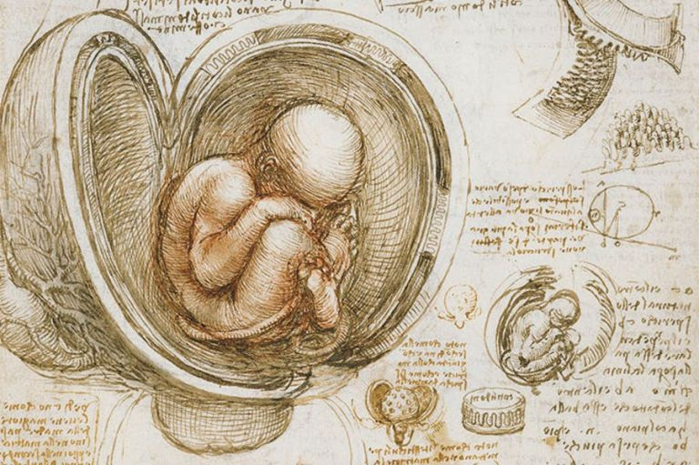 Λεονάρντο Ντα Βίντσι : Εντοπίστηκαν ίχνη μυκήτων, βακτηρίων και ανθρώπινου DNA σε σχέδια του μεγάλου καλλιτέχνη | tanea.gr