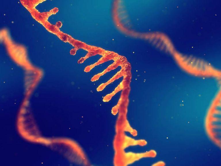 Κοροναϊός : Πώς λειτουργούν τα εμβόλια mRNA | tanea.gr
