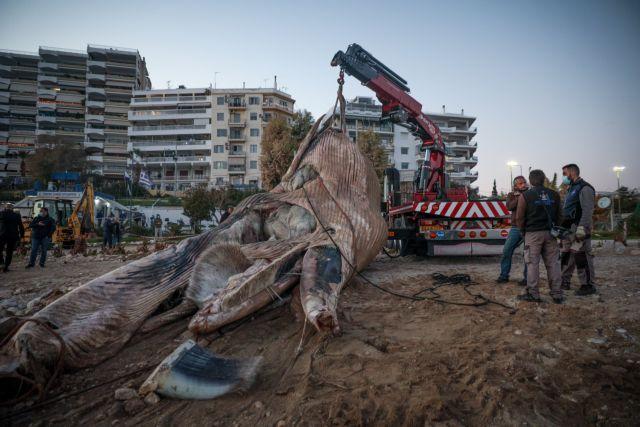 Ινστιτούτο Θαλάσσιας Προστασίας : Πώς ξεβράστηκε στον Πειραιά η φάλαινα;   tanea.gr