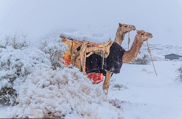 Στα λευκά ντύθηκε και η Σαχάρα – Στους μείον 2 βαθμούς η θερμοκρασία στη Σαουδική Αραβία | tanea.gr