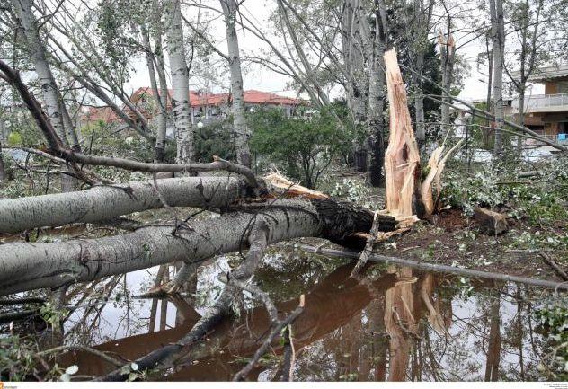 Κέρκυρα : Η κακοκαιρία προκάλεσε πλημμύρες, διακοπές ρεύματος και πτώση δέντρων | tanea.gr
