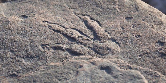 Τετράχρονη στην Ουαλία... ανακάλυψε πατημασιά δεινόσαυρου 220 εκατ. ετών | tanea.gr