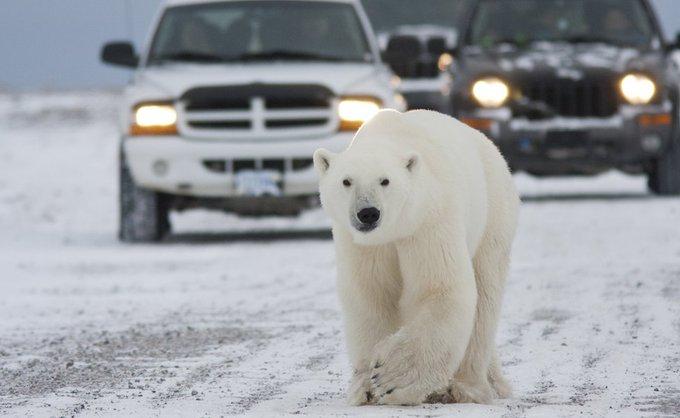 «Πολικές... αρκούδες στην Αλεξάνδρας» – Το Twitter γλεντάει με την κακοκαιρία «Μήδεια» | tanea.gr
