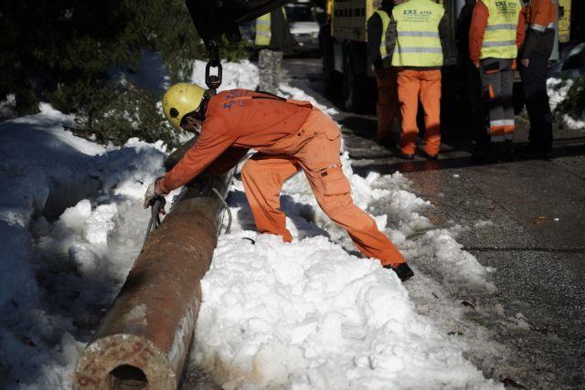 Εύβοια: Άνδρας καταπλακώθηκε από δέντρο | tanea.gr