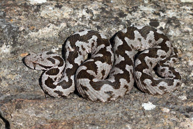 Έλληνας καθηγητής Βιολογίας καταρρίπτει μύθους για τα φίδια και τις «μαύρες χήρες»   tanea.gr