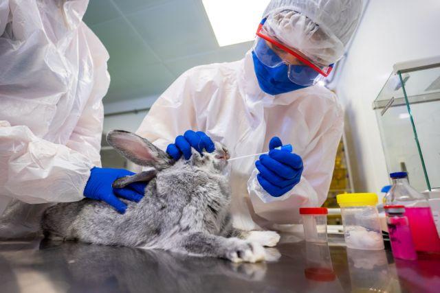 Η Ρωσία ανακοίνωσε το πρώτο εμβόλιο κατά του κοροναϊού για ζώα | tanea.gr