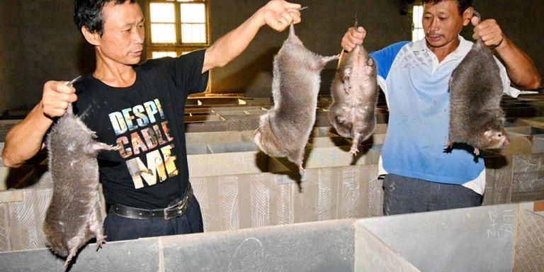 Ο κοροναϊός προήλθε από κινεζικά εκτροφεία άγριων ζώων λέει μέλος της αποστολής του ΠΟΥ | tanea.gr