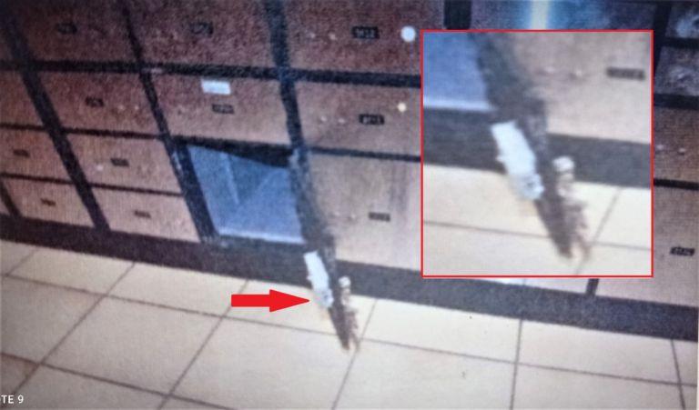 Το DNA στα γάντια «έδειξε» στην ΕΛ.ΑΣ. τον δράστη του ριφιφί στο Ψυχικό | tanea.gr