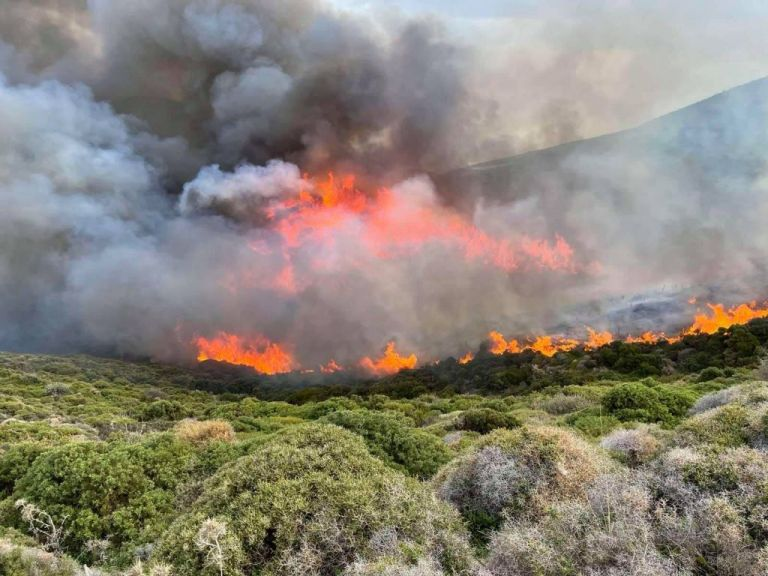 Σοκαριστικό ντοκουμέντο: «Θα βάλω φωτιά« είχε πει πρόεδρος κοινότητας στην Άνδρο   tanea.gr