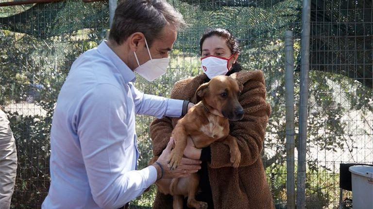Παγκόσμια Ημέρα Αδέσποτων : Επίσκεψη Μητσοτάκη στο καταφύγιο ζώων της Ηλιούπολης | tanea.gr