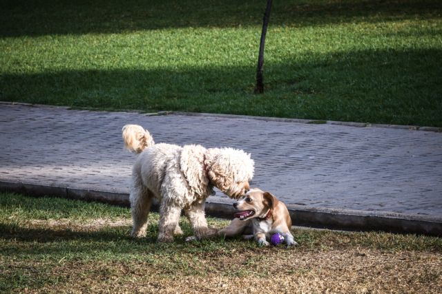 Σε δημόσια διαβούλευση το νομοσχέδιο για κατοικίδια και αδέσποτα ζώα – Βαριές ποινές για κακοποίηση | tanea.gr