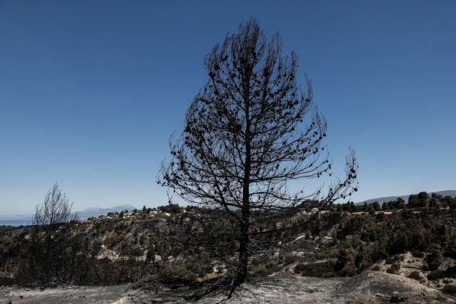 Σε ύφεση η φωτιά στην Κορινθία | tanea.gr