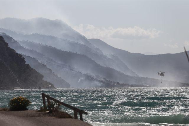 Φωτιά στον Σχίνο: Χιλιάδες μικρά ζωάκια καίγονται ζωντανά   tanea.gr