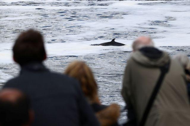 Φάλαινα παγιδεύτηκε στον Τάμεση: Αγωνιώδεις προσπάθειες να βρει τον προσανατολισμό της   tanea.gr