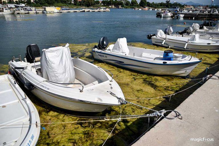 «Πράσινη παλίρροια» κατέκλυσε το λιμάνι της Πρέβεζας | tanea.gr