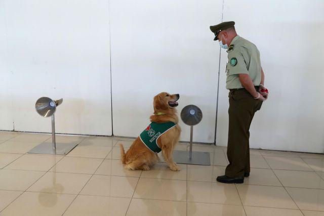 Η Ταϊλάνδη χρησιμοποιεί ειδικά εκπαιδευμένους σκύλους ως ανιχνευτές κοροναϊού   tanea.gr