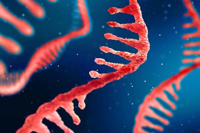 Πρωτοποριακή θεραπεία εγκεφαλικών όγκων με RNA από επιστημονική ομάδα με επικεφαλής Έλληνα   tanea.gr