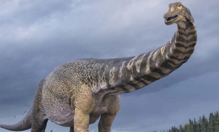 Ανακάλυψαν ίχνη του δεινόσαυρου «Αυστραλοτιτάνα» – Είχε μέγεθος γηπέδου μπάσκετ και ύψος δύο ορόφων   tanea.gr