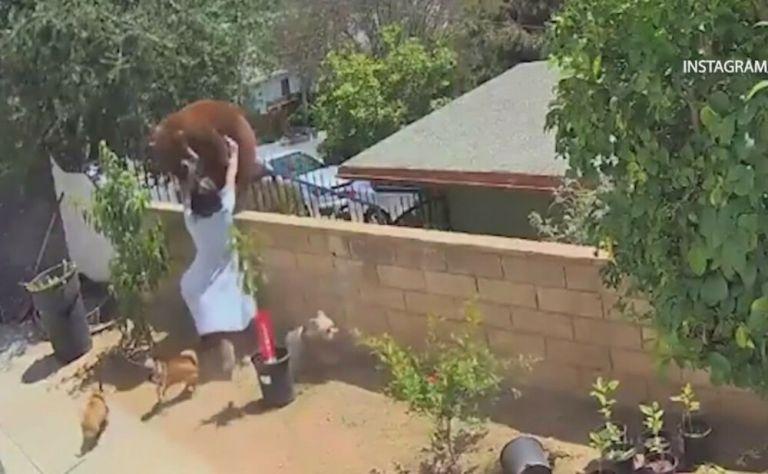 Απίστευτο βίντεο: 17χρονη παλεύει με αρκούδα που επιτέθηκε στα σκυλιά της | tanea.gr