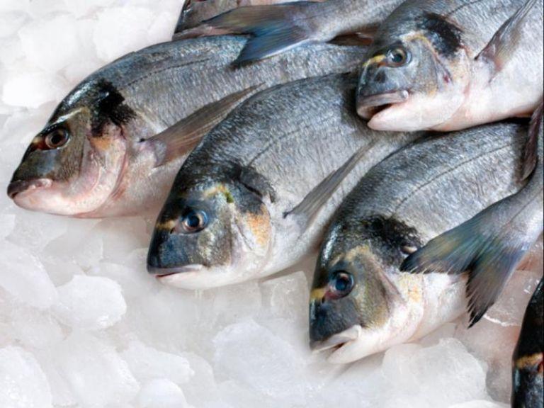 Πάνω από 7 εκατ. λαθραία τσιγάρα κρυμμένα ανάμεσα σε κατεψυγμένα ψάρια | tanea.gr
