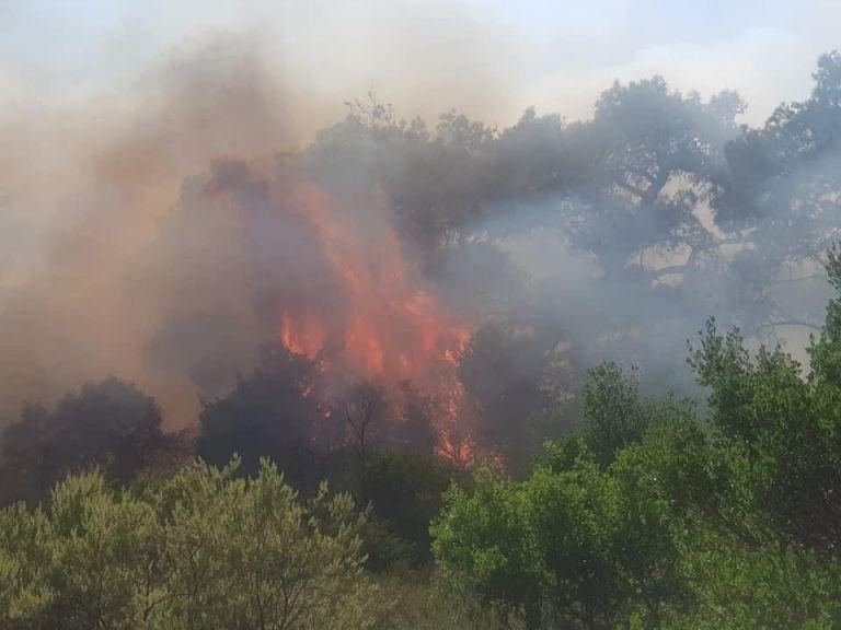 Μεγάλη δασική πυρκαγιά στον Έβρο | tanea.gr