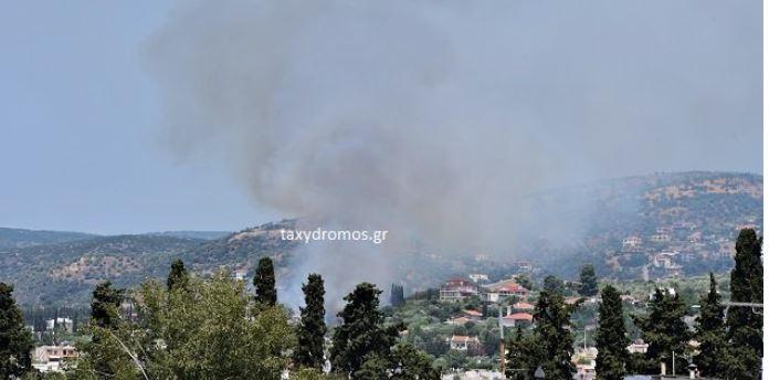 Φωτιά στον Βόλο – Μεγάλη κινητοποίηση της πυροσβεστικής | tanea.gr