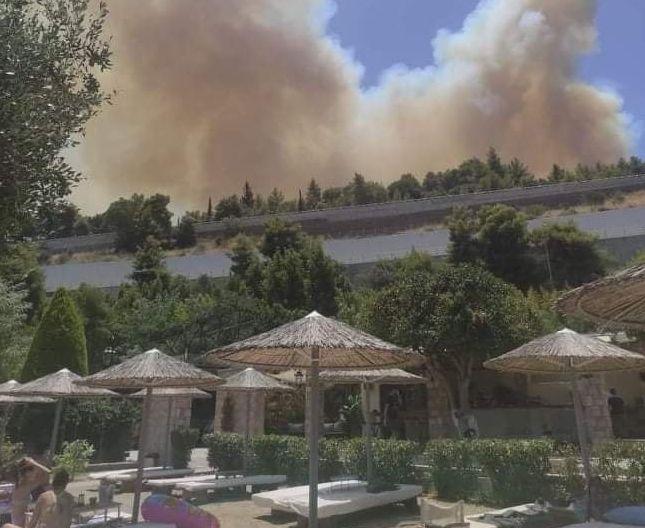 Συναγερμός για τη φωτιά στην Αχαΐα – Οδηγοί προσπαθούν να φύγουν από τις παραλίες | tanea.gr