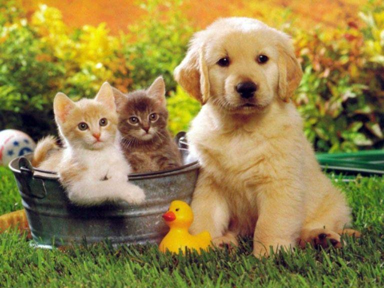 Κοροναϊός: Γάτες και σκύλοι κολλάνε εύκολα κοροναϊό από τους ιδιοκτήτες τους | tanea.gr