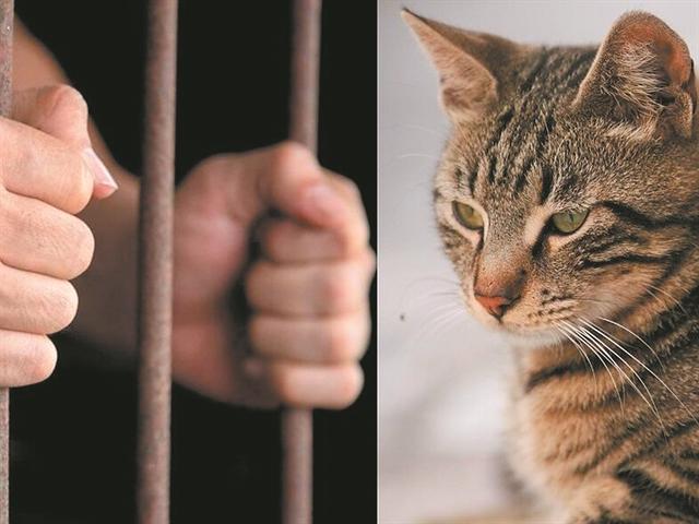Η πρώτη προφυλάκιση για τη θανάτωση ζώου είναι γεγονός!   tanea.gr